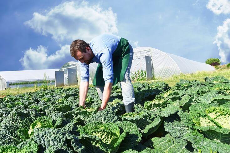 Riesgos del Sector Agrícola